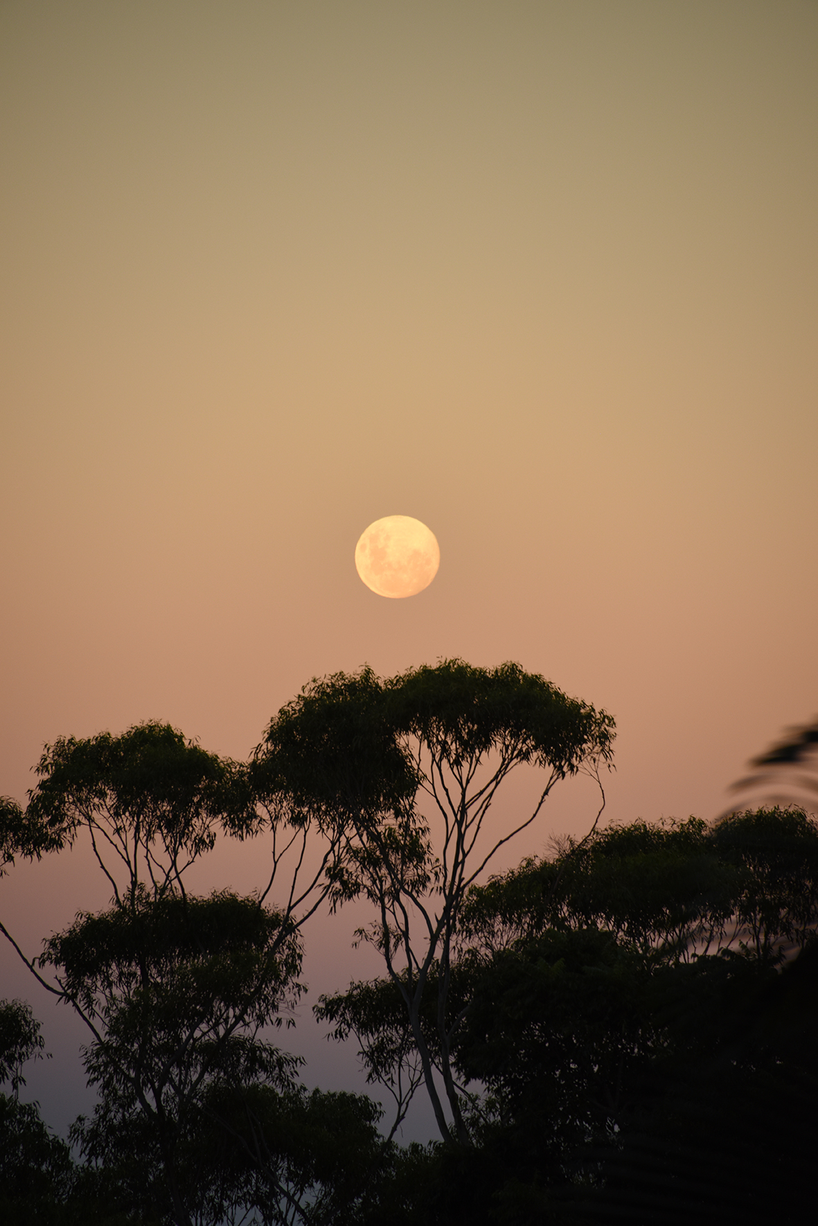 moonrise over Koonyum