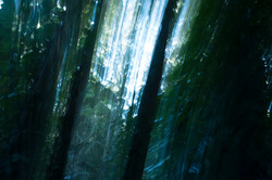 Forest whispers II