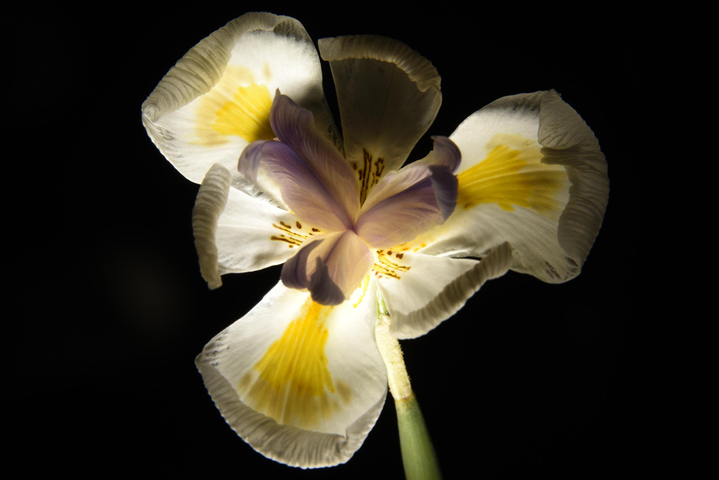 flora light