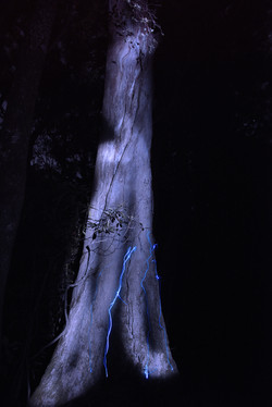 illuminated tree II