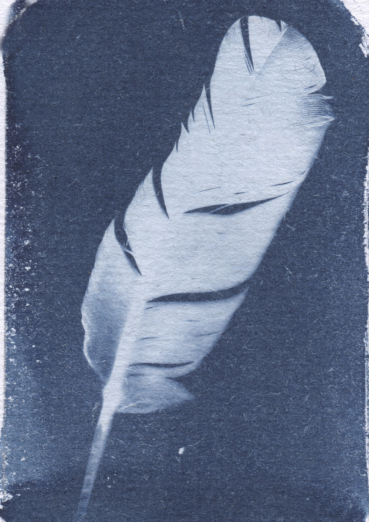 cyanotypefeather
