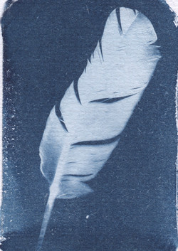 cyanotypefeather