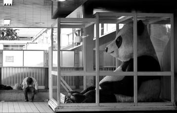 panda bridge