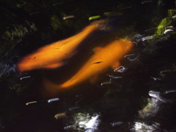 sonhar peixe