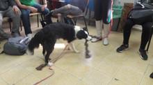 כלבנות טיפולית בפנימיה