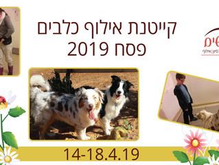 קייטנת אילוף כלבים פסח 2019
