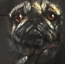 Dog on textile