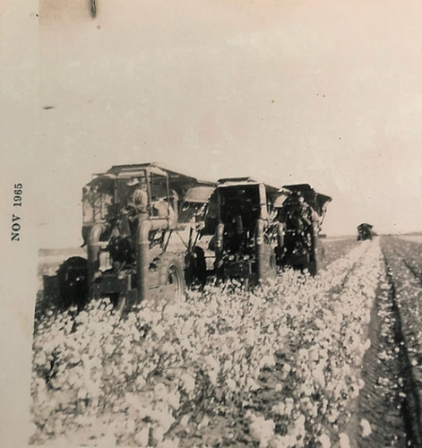 my grandfather, dad and uncle - cotton fields