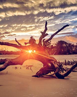 Jekyll Island, Driftwood Beach.jpeg