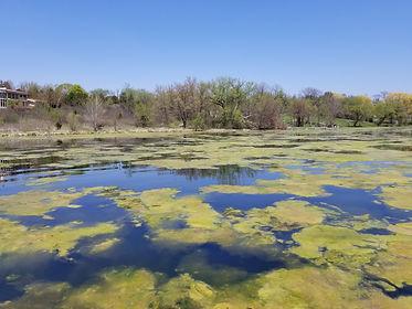 Algae Bloom, Algae Control, Lake Maintenance