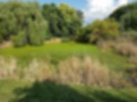 Duckweed Invasion