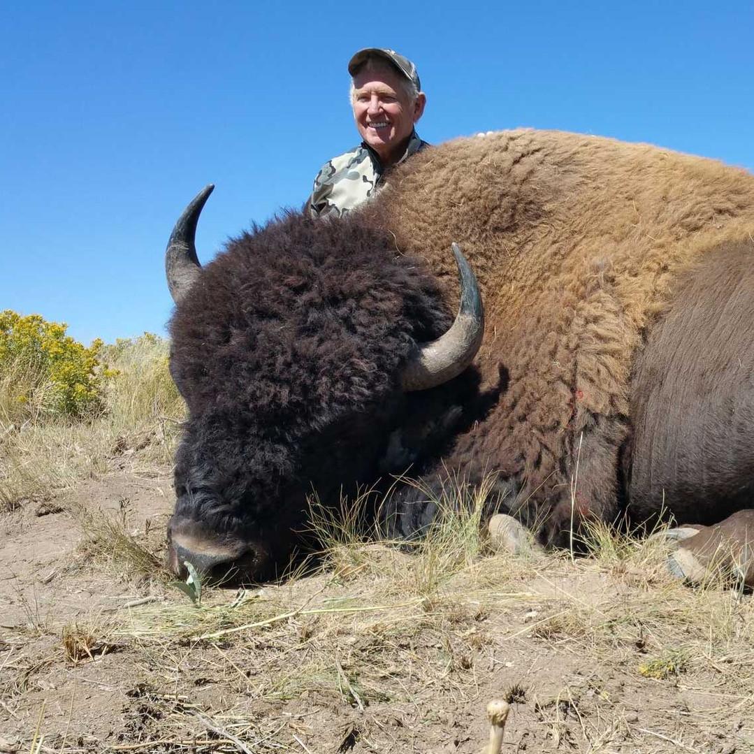 Big-Horn-Sheep-Hero.jpg