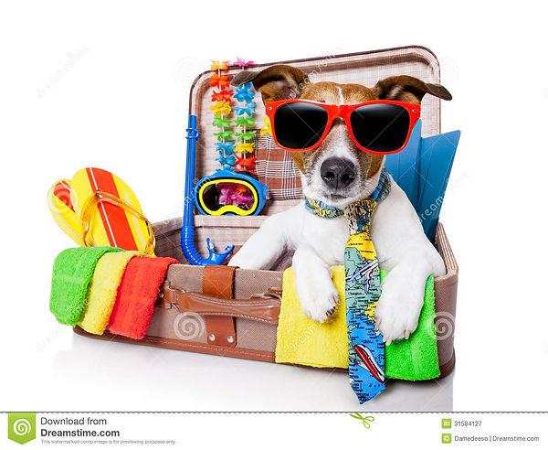 perro-de-las-vacaciones-de-verano-315841