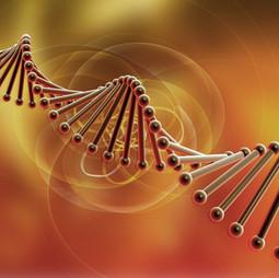 mylinique nutricao perfil enzimatico