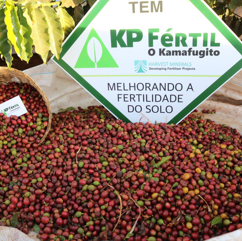 CAFÉ PRODUZIDO COM KP FÉRTIL