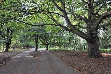 Sutton Park.jpg