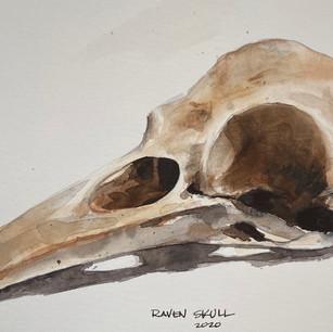 RAVEN SKULL | Watercolor | Sketchbook