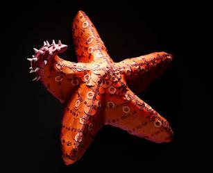 Paper_Animals_Starfish.jpg