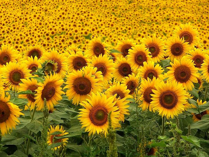 Rioflor Associaçao dos terapeutas florais