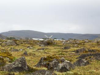 Iceland - Mosfellsbaer Golf - Golfklúbbur Mosfellsbæjar - Hlidavollur - Hlíðavöllur - bird 1