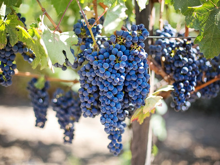 Sharing the Fruit of the Vine