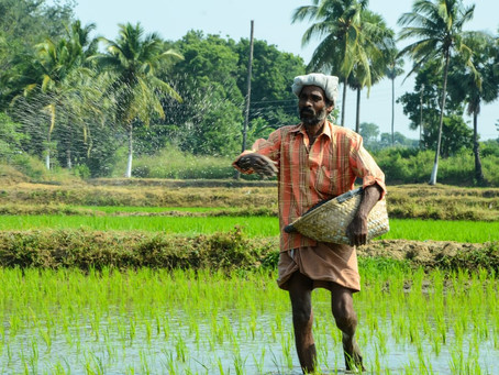 Agriculture: Saving India yet again?