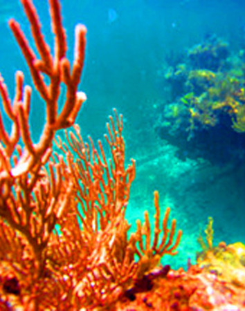 Fish-Coral-1.jpg