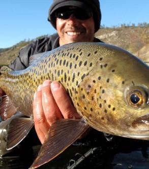 trout-fly-fishing-mongolia-500x333.jpg