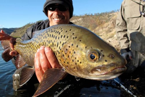 trout-fly-fishing-mongolia-500x333.jpg