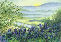 Bluebell Dawn - SOLD