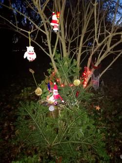 Christmas Wonderland in Parklands Wood