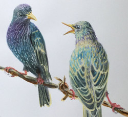 Evening Gossips - SOLD