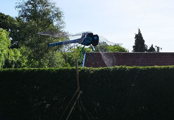 A wonderful dragon fly hovering over Brook Cottage