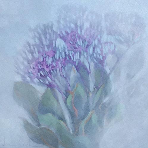 Sea Lavender with Sea Fog