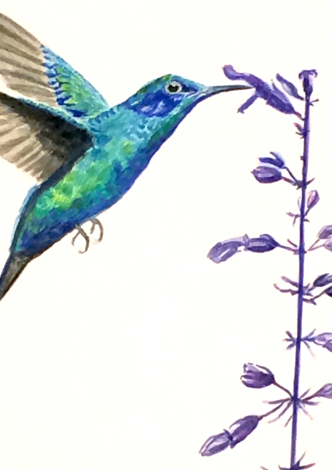 Hummingbird and Salvia - SOLD