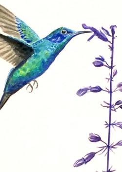 Hummingbird and Salvia - SOLD