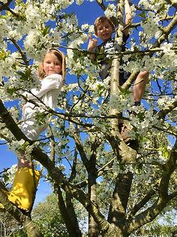 Cherry Tree Climbing.JPG