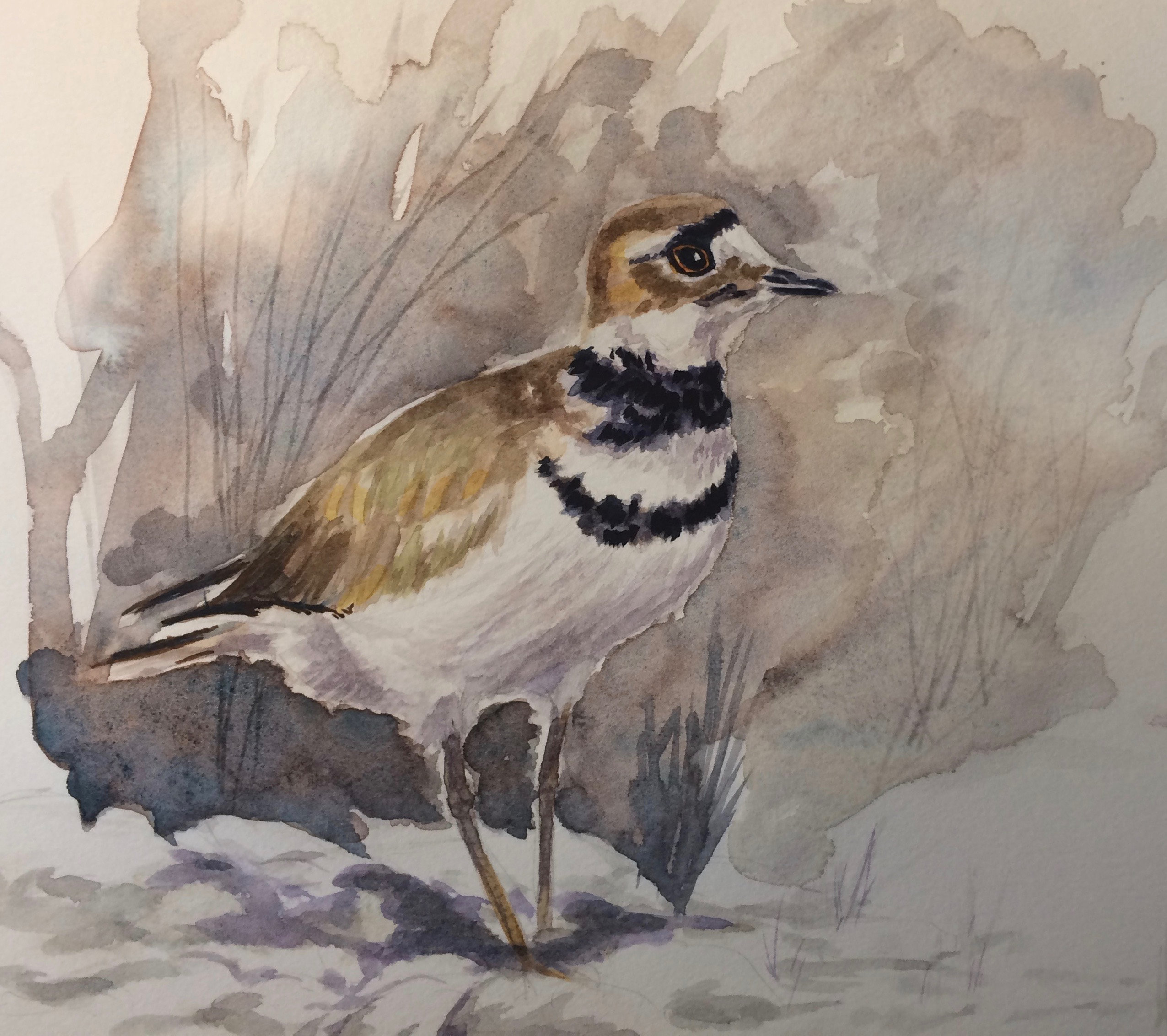 Californian Killdeer - SOLD