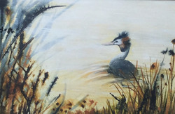 Early morning dip - SOLD