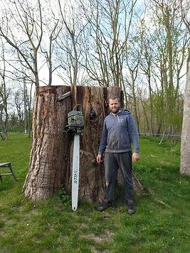 The massive trunk of Parklands' Rewood