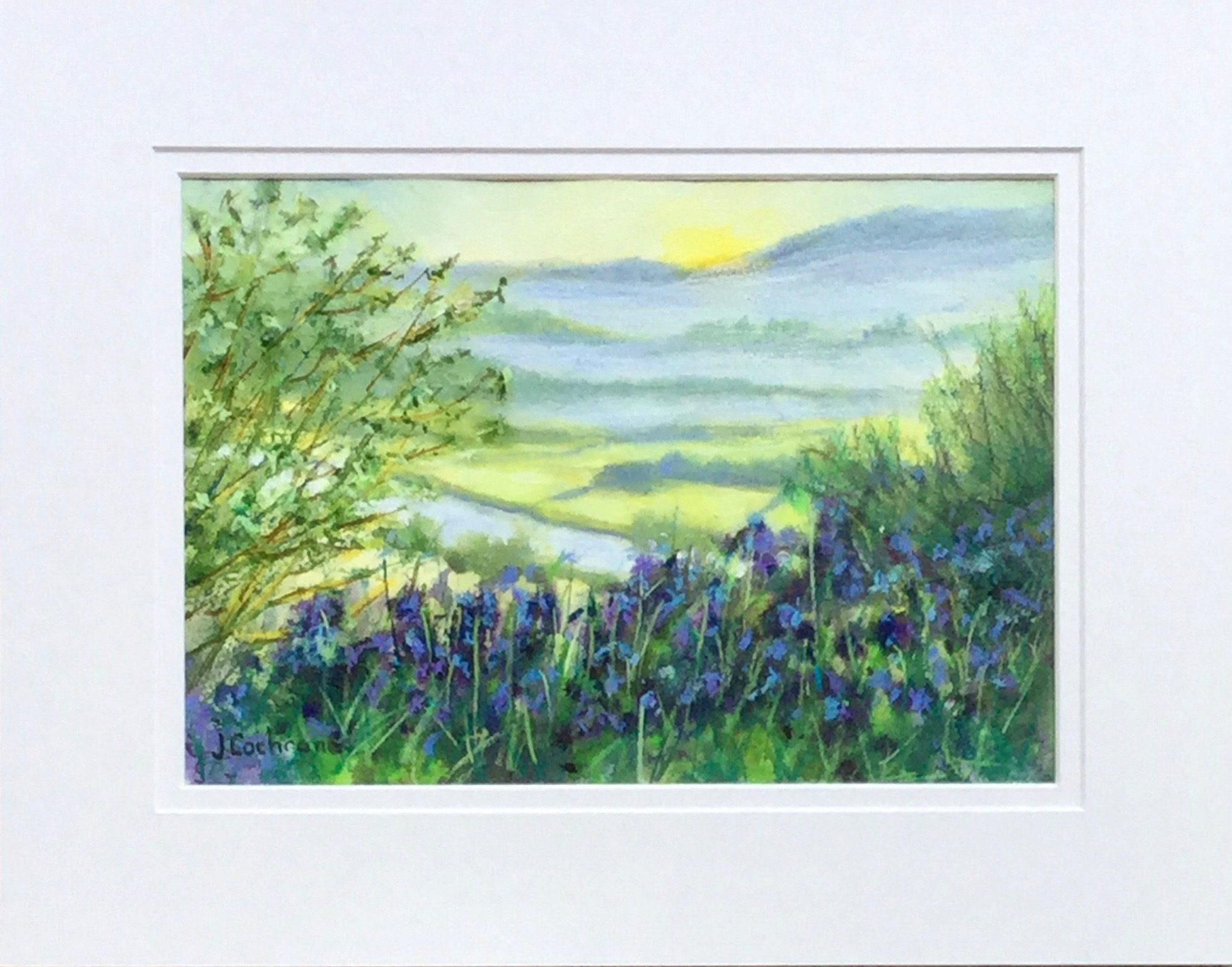 Bluebell Dawn - Usk Valley - SOLD