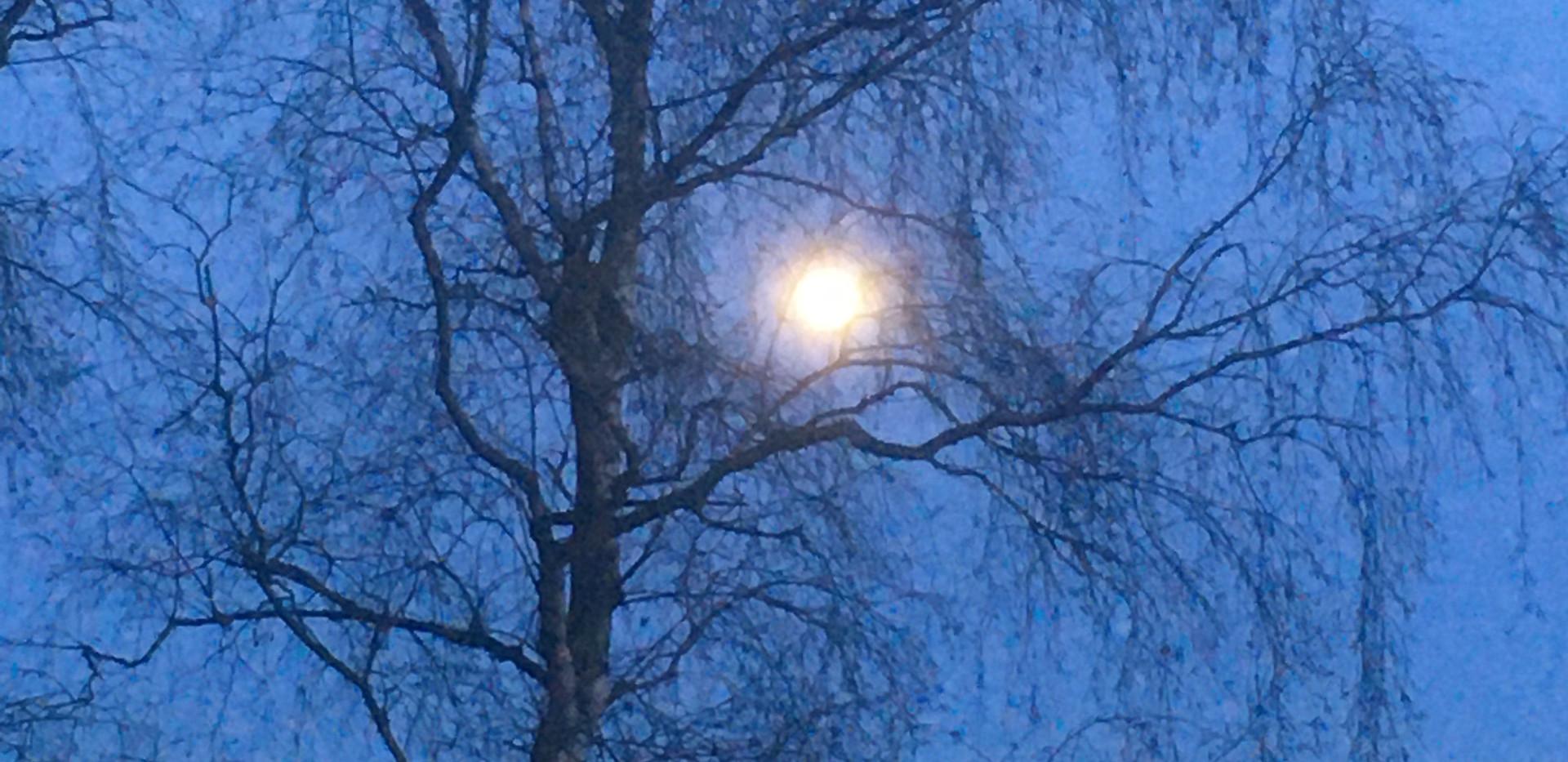 returning by moonlight