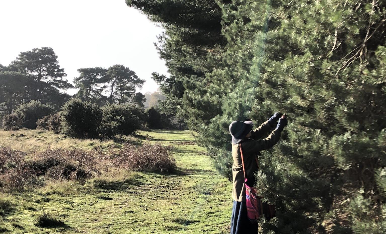 picking greenery