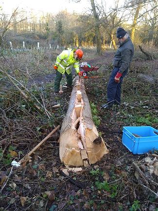 Friends of  Parklands Wood Splitting an Ash