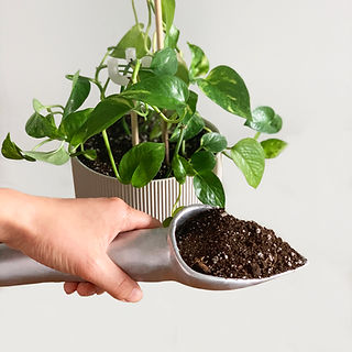 POTHOS HOLLOW TROWEL