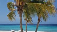 Palmboom op Cas Abou