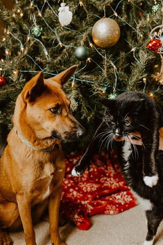 Dog-Cat-Christmas-Boise.jpg