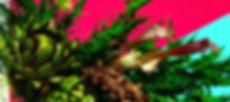 evolwebtop_04.jpg