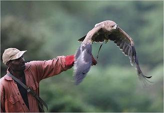 Mwanzia releasing bird.jpg