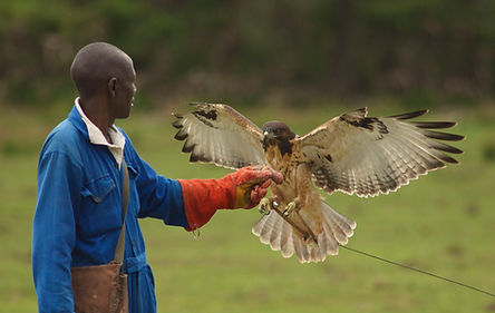 Mwapa falconer.jpg